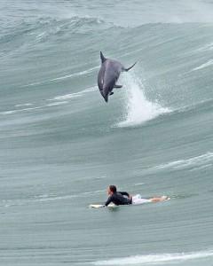 1surf dofi