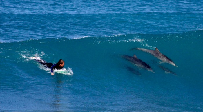 Surf con delfines