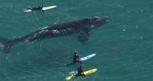 Surfeando con una ballena