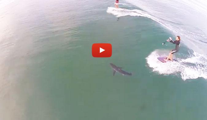 Surfeando Sobre Un Tiburón
