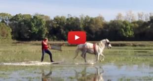 Surf a caballo