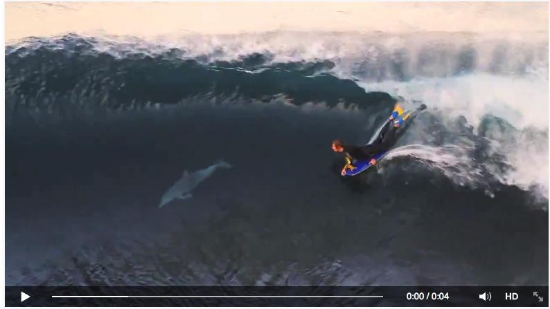 Los Primeros Surfistas Fueron Los Delfines