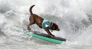 perro surfero - Artsurfcamp